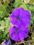 flower09